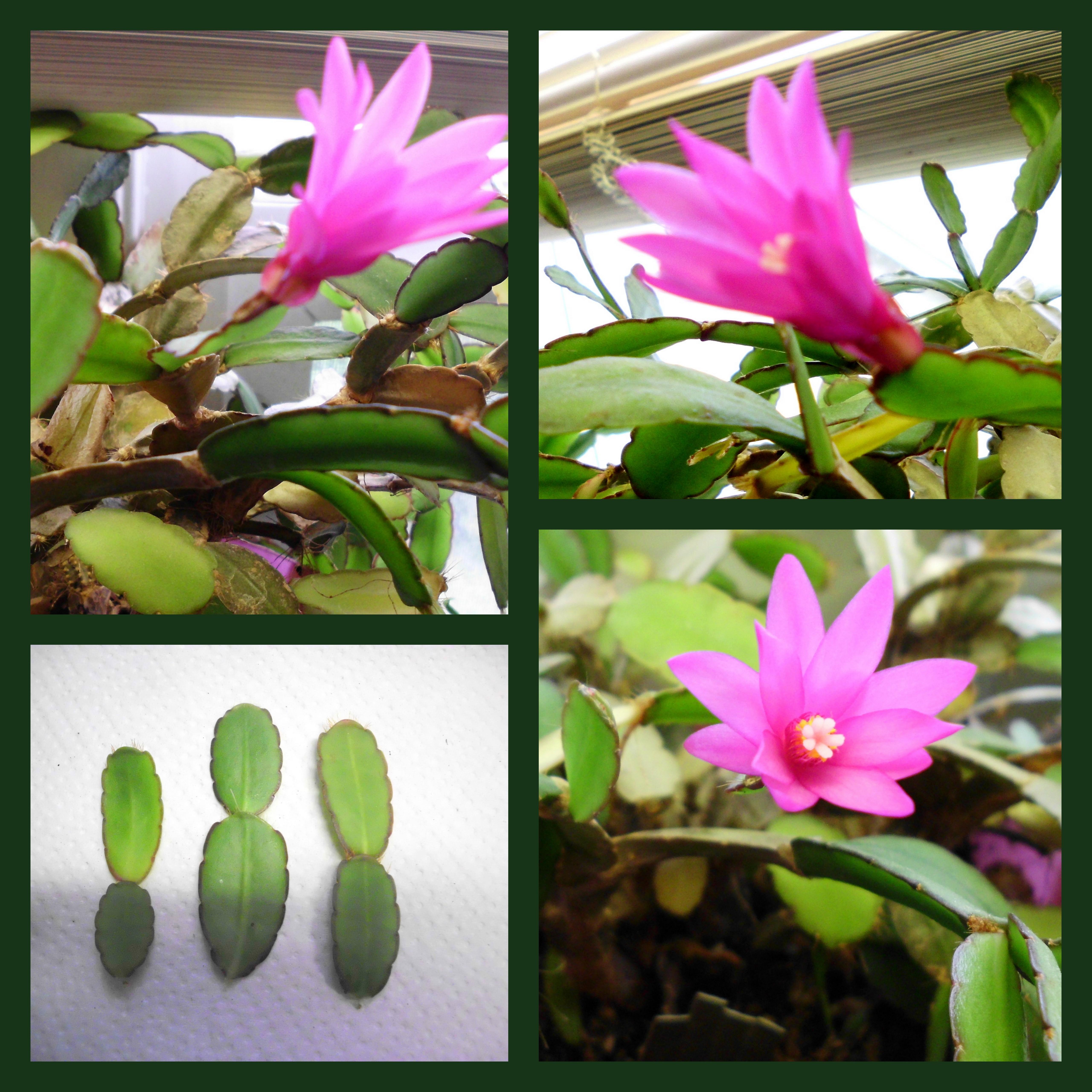 easter-cactus